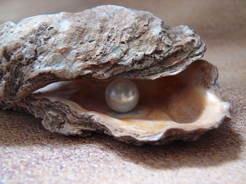 oyster-1327311_1920